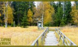 Zieleniec jesienią