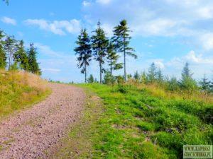 andrzejowka-schronisko