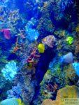 malta-oceanarium