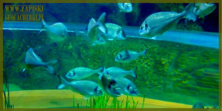 Malta: Maltańskie oceanarium, czyli Narodowe Akwarium Malty