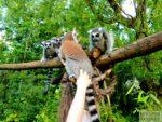 opole-zoo