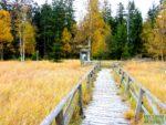 zieleniec-jesien