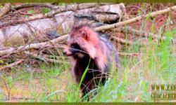 Górznieńskie zwierzęta