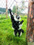 zoo_mieroszow_łączna
